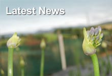 Latest News from Moorfield Farm