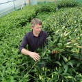 Selecting quality fresh flowers