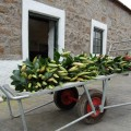 Fresh lilies from Moorfield Flowers
