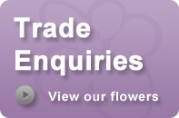 Trade Enquiries from Florists